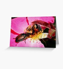 Sharing - Bumblebee and Beetle Sharing Nectar Greeting Card
