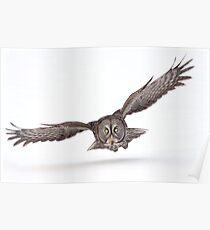 Under The Radar/Great Gray Owl Poster
