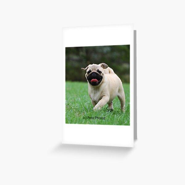Pug baby Greeting Card