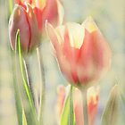 The Scent of Tulips by AngieDavies