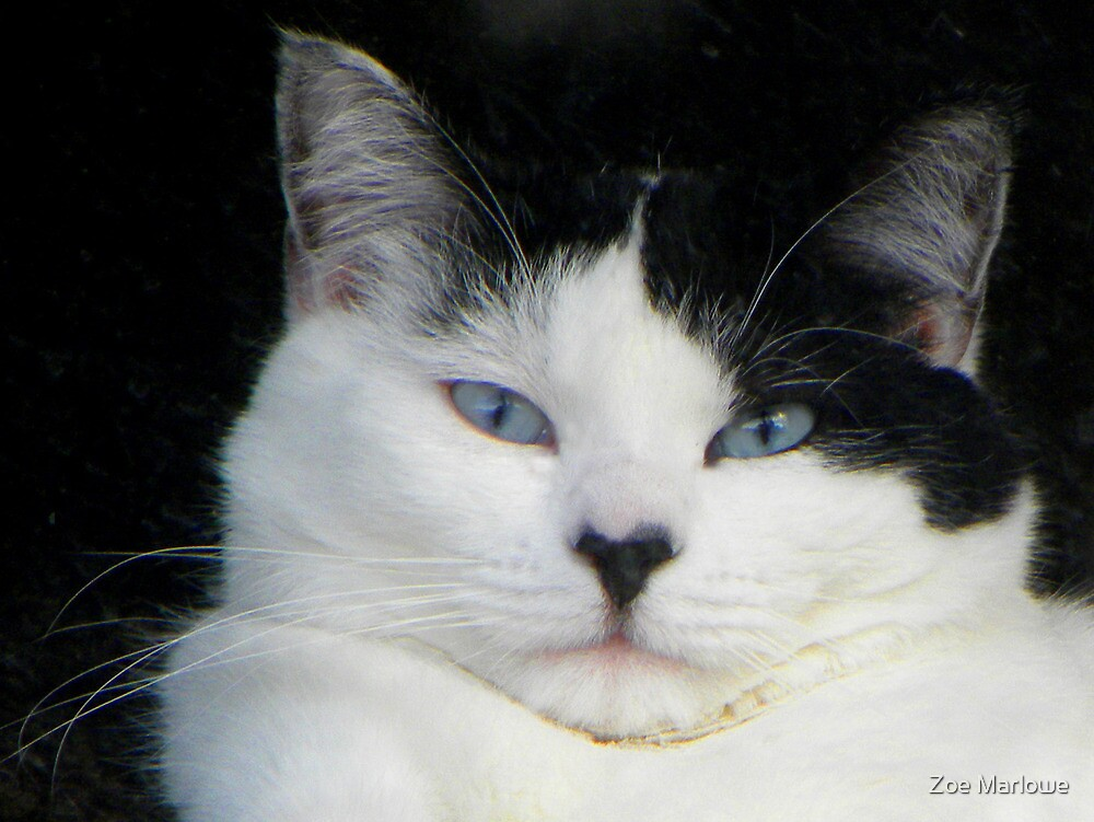 What A Kitty Face by Zoe Marlowe