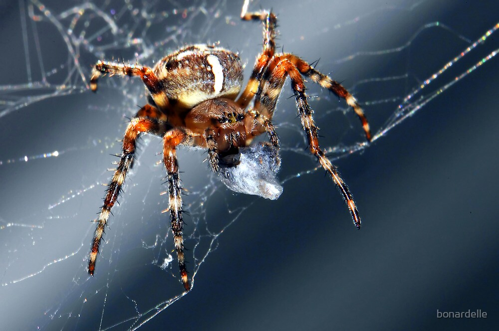 spider by bonardelle