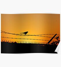 Bird on a Barbed Wire Poster