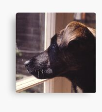 Kippa The Dog Canvas Print