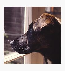 Kippa The Dog Photographic Print