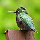 Hummingbird by MaryinMaine