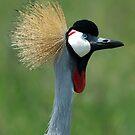 Crowned crane by Paulo van Breugel