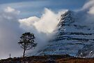 Caledonian Pine, Glen Torridon,West Highlands of Scotland. by PhotosEcosse