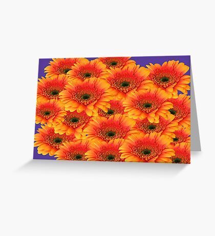All These Gorgeous Gerberas Greeting Card