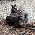 Baby Long Legs by Sandy Shiner-Swanson