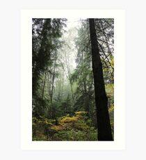 Vancouver - Stanley Park Art Print