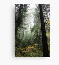 Vancouver - Stanley Park Canvas Print