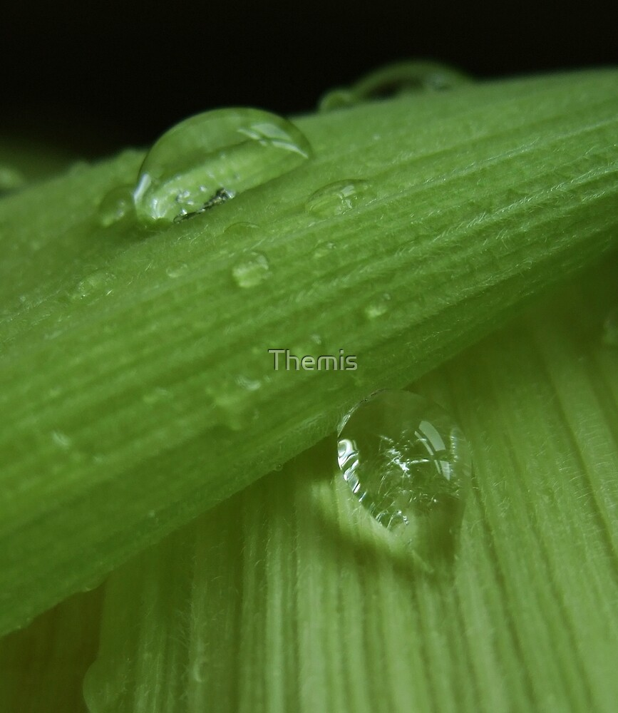 Green pearls by Themis