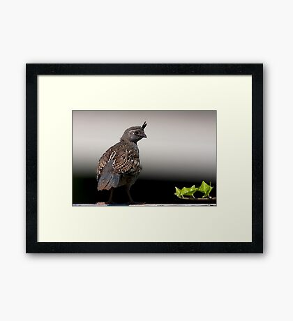 Young Shoots Framed Print