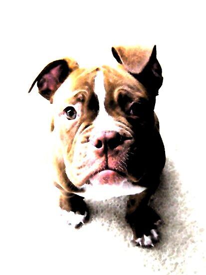 Bulldog Puppy by Michael Tompsett