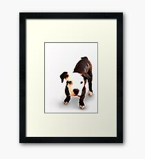 Brindle Bull Terrier Puppy Framed Print