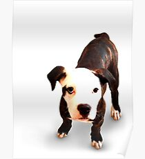 Brindle Bull Terrier Puppy Poster