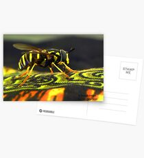Hoverfly Postcards