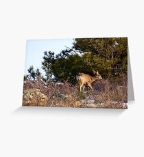 Back to the Timber Greeting Card