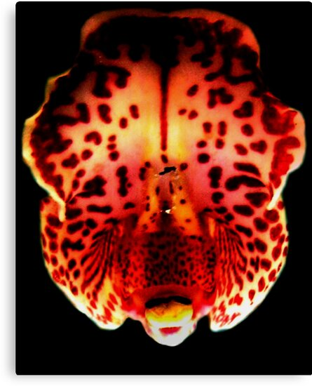 Carnival - A New Perspective on Orchid Life by ©Ashley Edmonds Cooke
