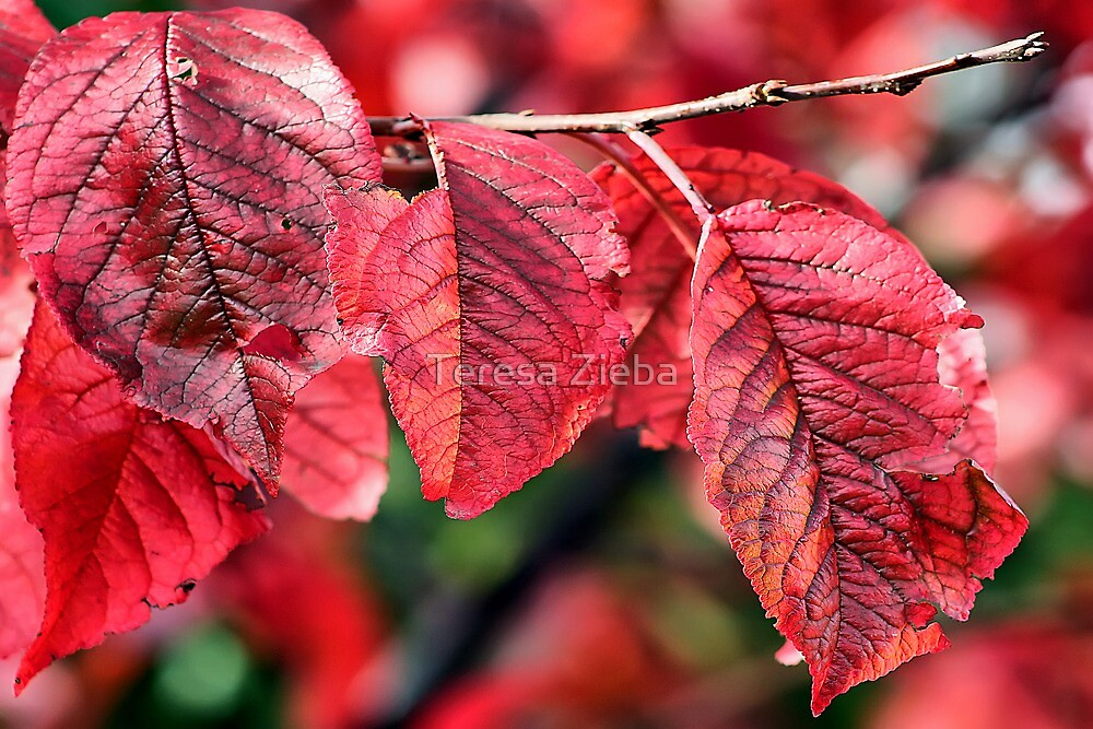 Autumn impression by Teresa Zieba