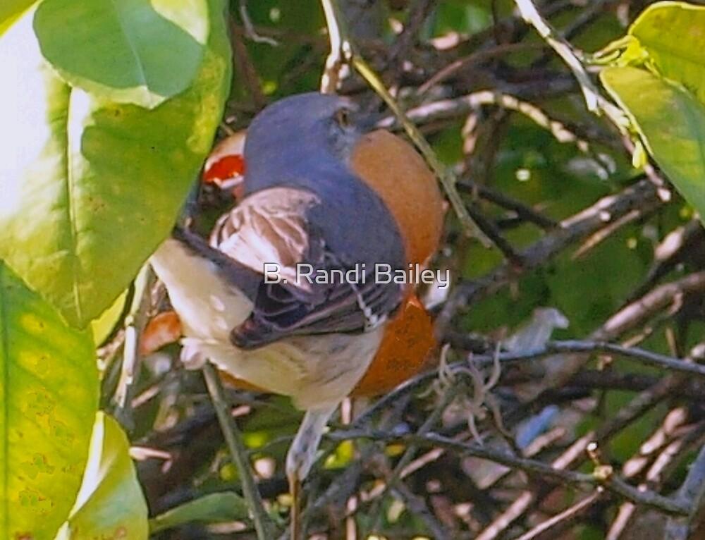 The Joy of Citrus by ♥⊱ B. Randi Bailey