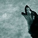 Cry of the lone wolf by MargaretC