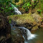 Onomea Waterfalls by Alla Gill