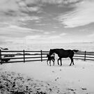 Mama Note in Black & White by Sandy Shiner-Swanson
