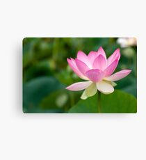 Pink Lotus Flower Canvas Print