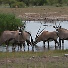 Group of Oryx at a water hole by christopher363