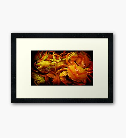 crabs and a lobster Framed Print