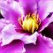 *Avatar/Beautiful Clematis - Enchanted Flowers*