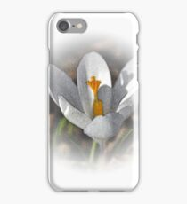 First Crocus of Spring 2011 iPhone Case/Skin
