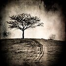 Hilltop Tree by Carlos Restrepo