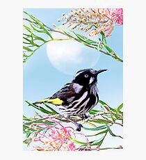 New Holland Honeyeater with moon Photographic Print