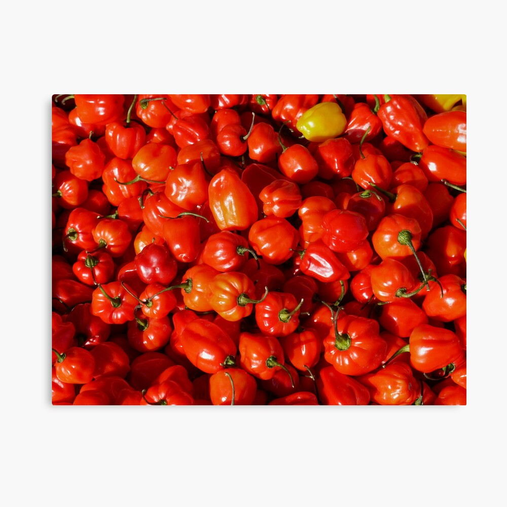 Food - small red peppers Canvas Print