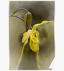 First Bloom - Orchid Flower Poster