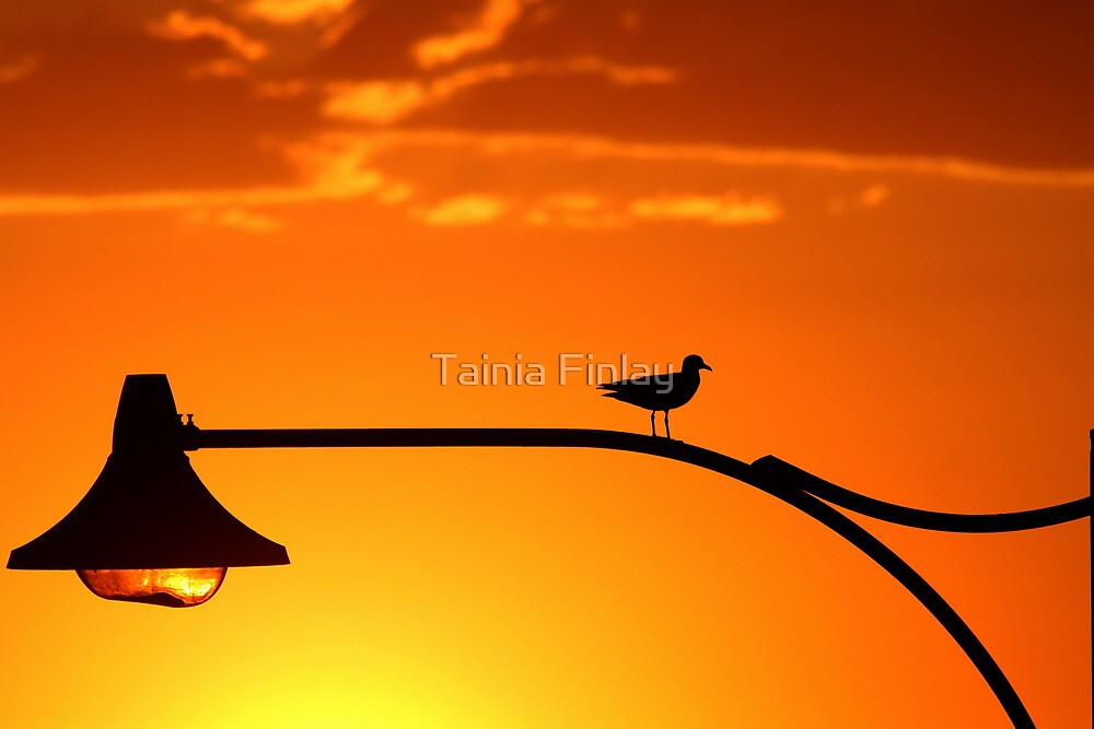 Taking 5 by Tainia Finlay