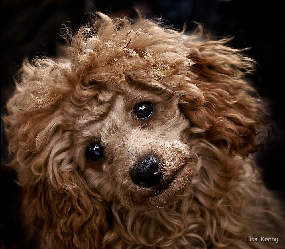 too cute by Lisa Kenny