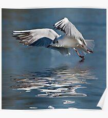 gull at surrey lake Poster