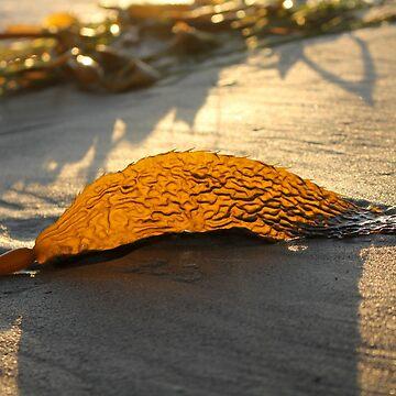 A Golden Glow by cuprum