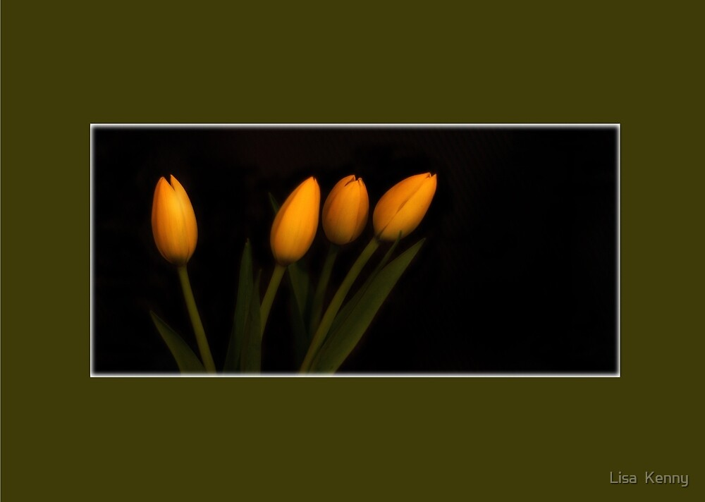Tulips  by Lisa  Kenny