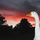 Goose Allmighty by jimi9
