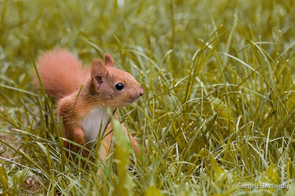 Baby Squirrel by Sergey Bezberdy