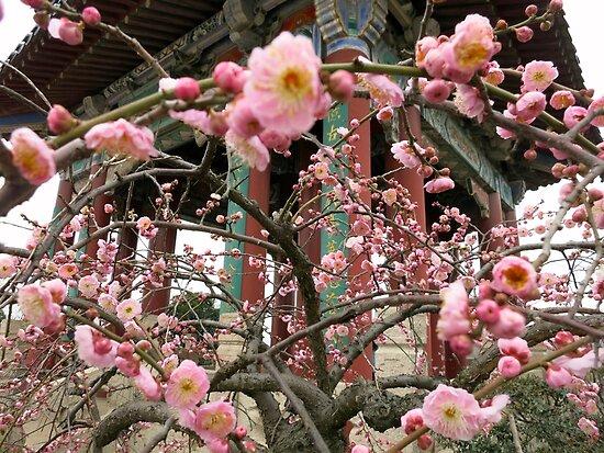 Plum Blossoms in Spring by Mitchell Blatt, China Travel Writer