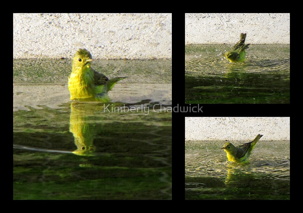 Yellow Warbler ~ Spring Cleaning by Kimberly Chadwick