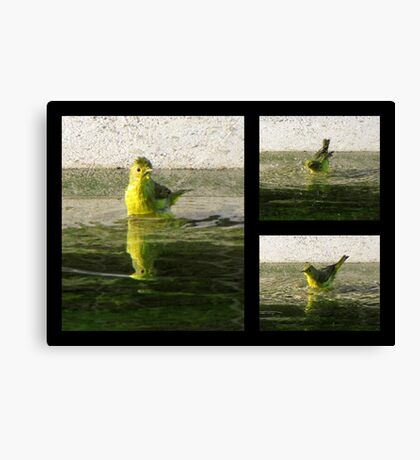 Yellow Warbler ~ Spring Cleaning Canvas Print