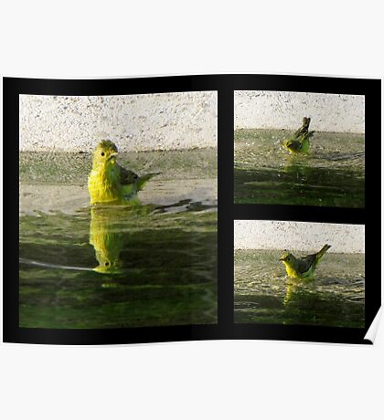 Yellow Warbler ~ Spring Cleaning Poster