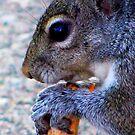 Peanut Time by shutterbug2010